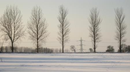 Trees along Bury Lane, taken from Bolt Cellar Lane