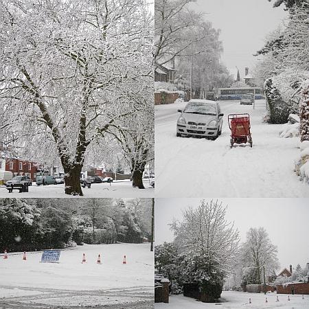 Trees at the top of St John's Road / Hartland Road / Kendal Avenue